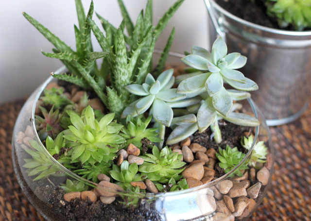 succulent miniature garden in bowl