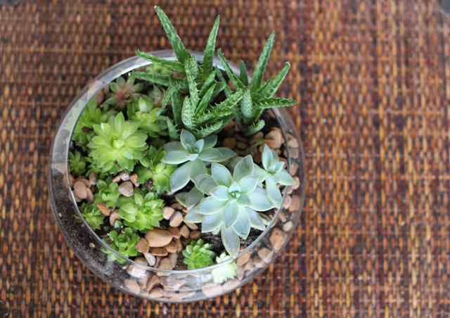 Indoor Succulent Garden josaelcom