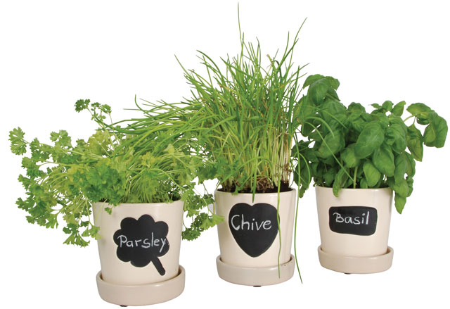 chalkboard paint herb pot grower chives chalk basil
