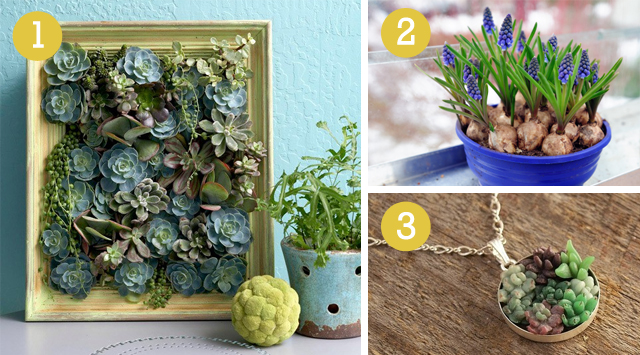 weekend diy indoor garden willard and may outdoor