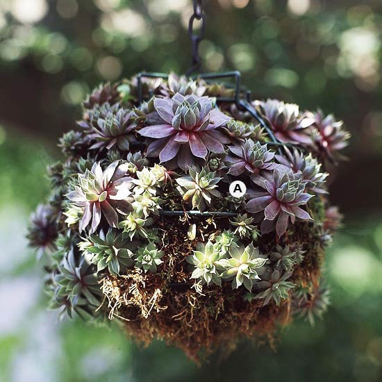 Weekend DIY: Hanging Basket Succulents