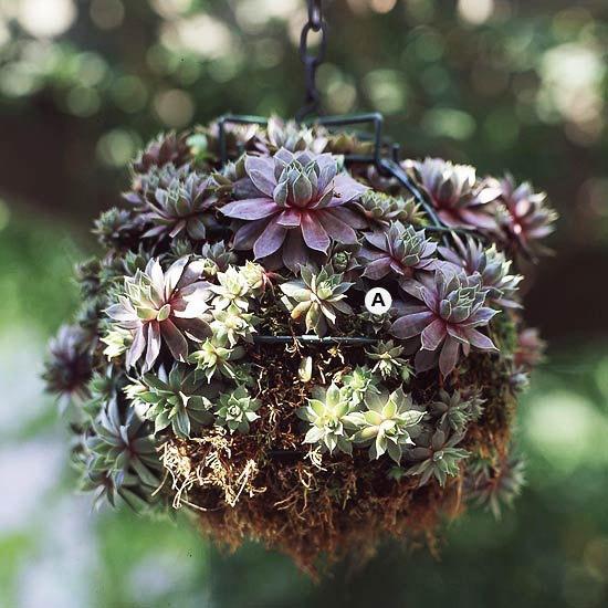 succulent hanging basket diy