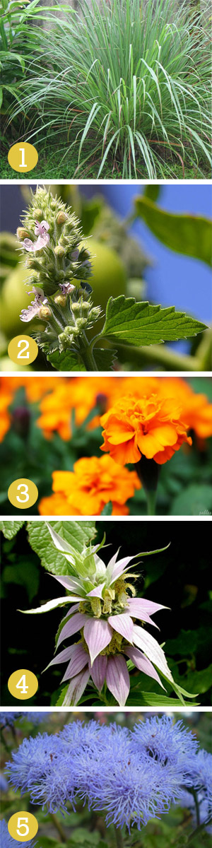 Weekend Diy Mosquito Repelling Plants Willard And May