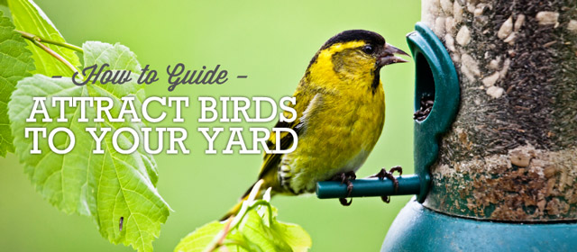How To Attract Birds To Your Backyard birds | willard and may outdoor living blog