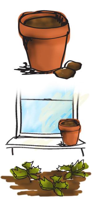 begonia-instructions1