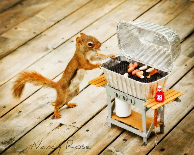 nancy-rose-squirrels-115