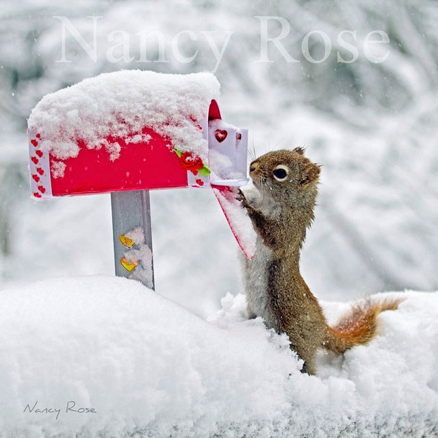 nancy-rose-squirrels-139