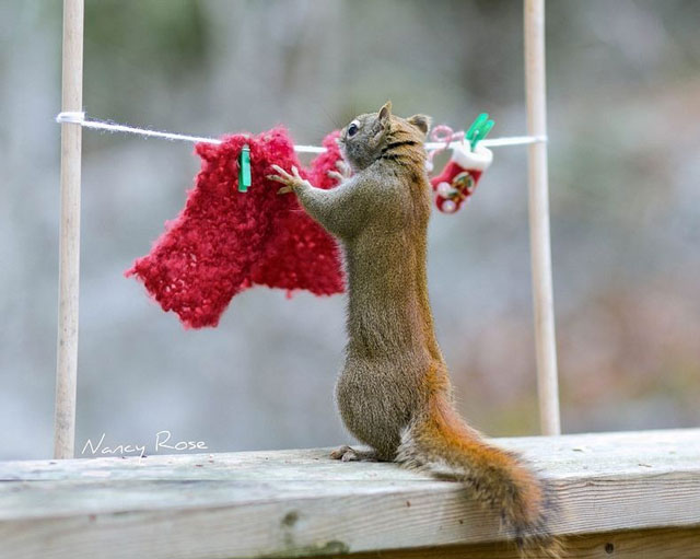 nancy-rose-squirrels-72