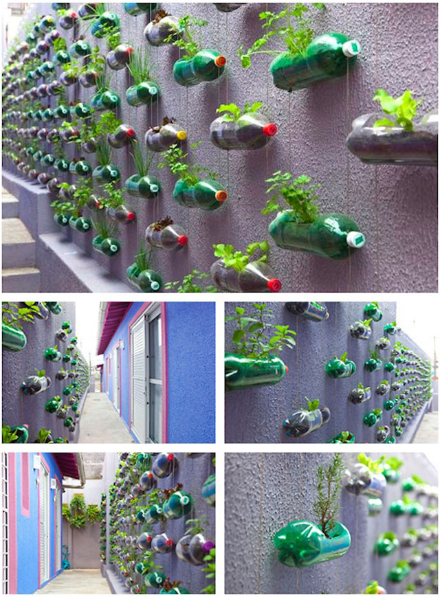 vertical-garden7