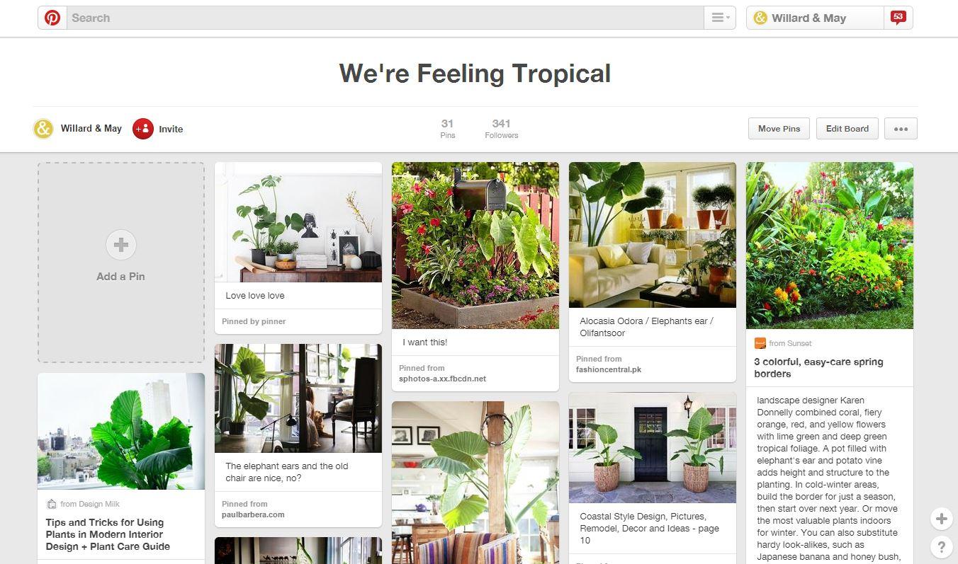 tropicalplantspinterest